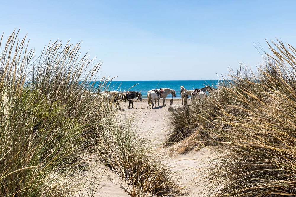 Hotel camargue famille luxe