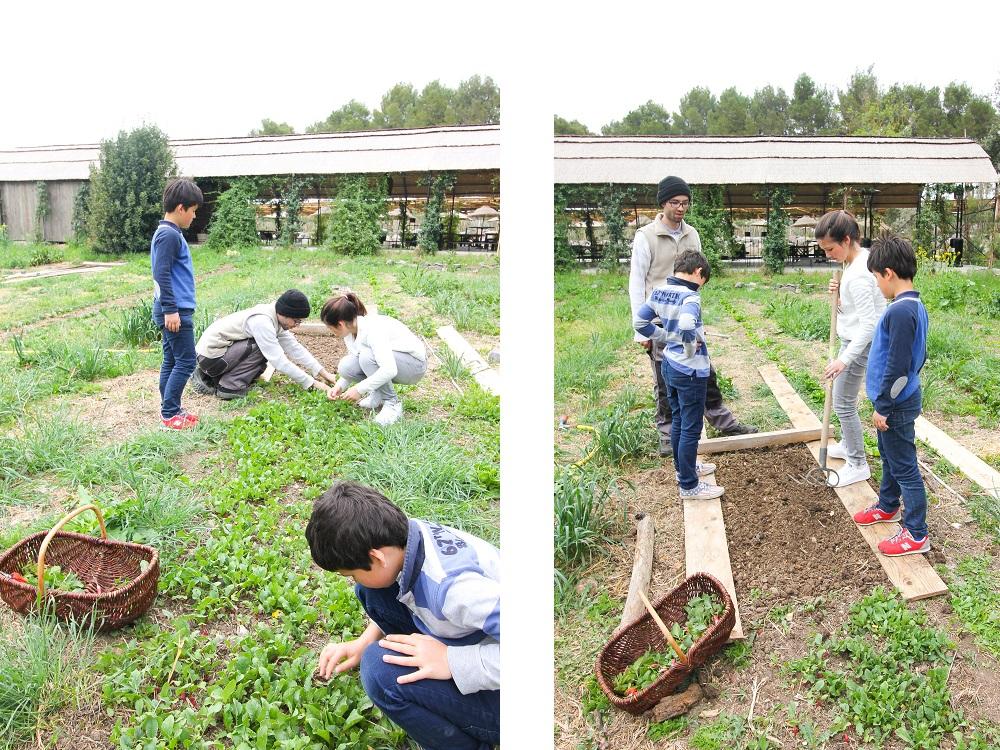 domaine de tarbouriech noé jardinnier